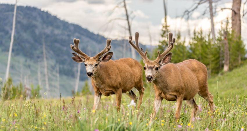 هیچ مجوز شکاری برای گردشگر داخلی و خارجی صادر نشده است