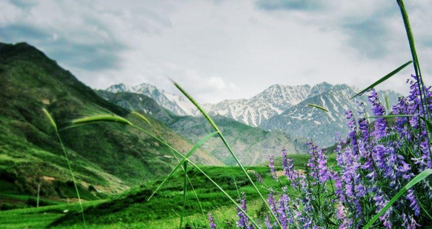 دره تخت، کشت زار انواع گلهای صادراتی