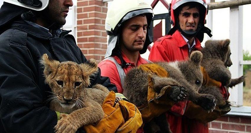 رژه حیوانات وحشی در خیابان های مشهد!