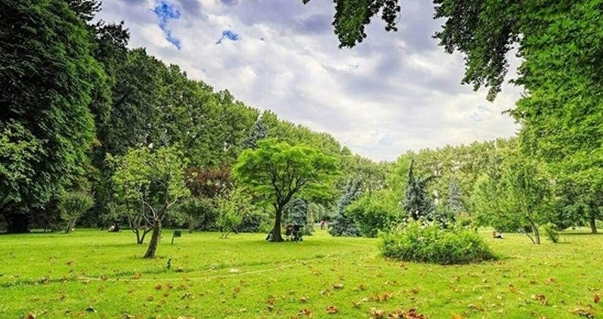 پاکسازی و خشکه گیری 500 اصله درخت کاخ سعدآباد آغاز شد