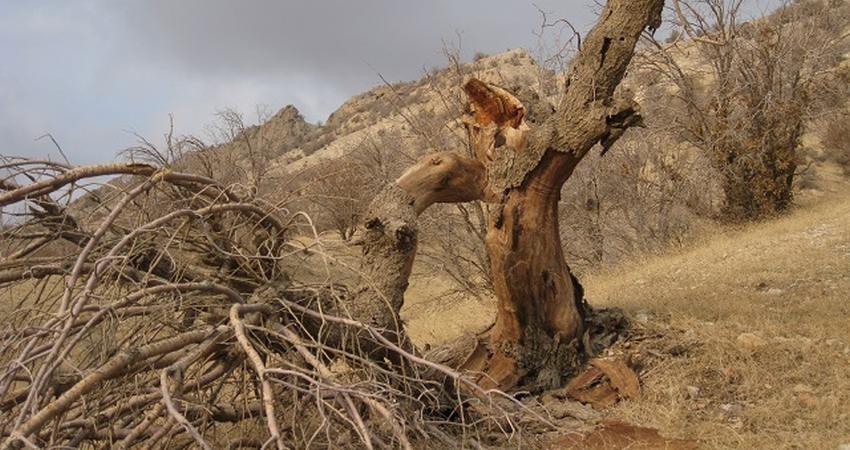 خشکی بلای جان 80 هزار هکتار جنگل کهگیلویه و بویراحمد