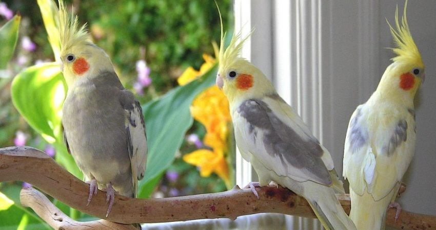 کشف یک محموله قاچاق انواع پرنده در گمرک