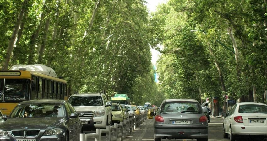 سیمان، بلای جان درختان تهران