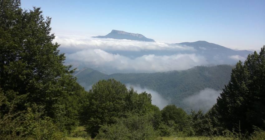 """دولت حق واگذاری """"جنگل های هیرکانی"""" را ندارد"""