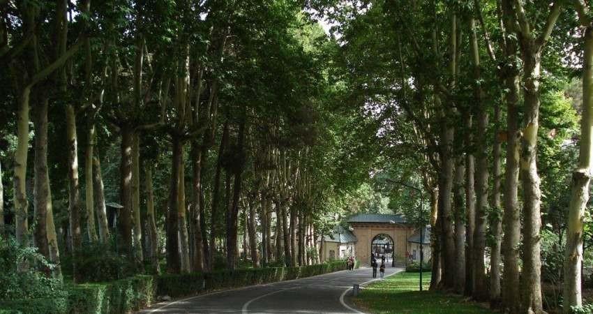 مراسم روز درختکاری در مجموعه سعدآباد برگزار شد
