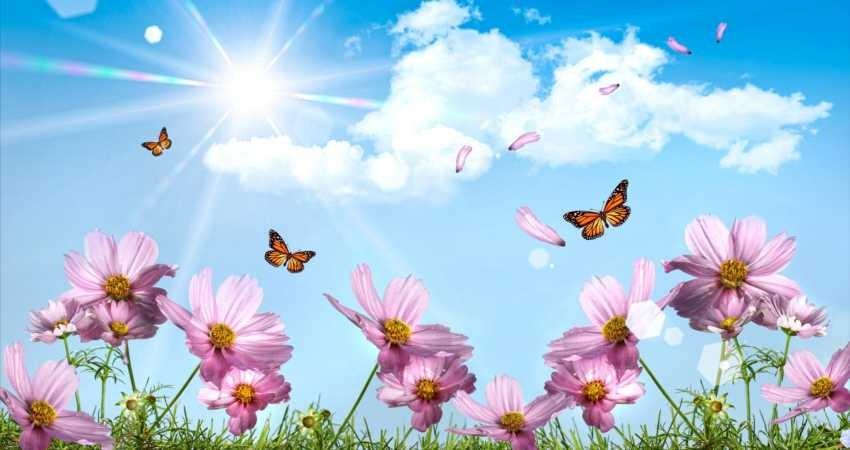 پروانه ها شاخص سلامت اکوسیستم هستند