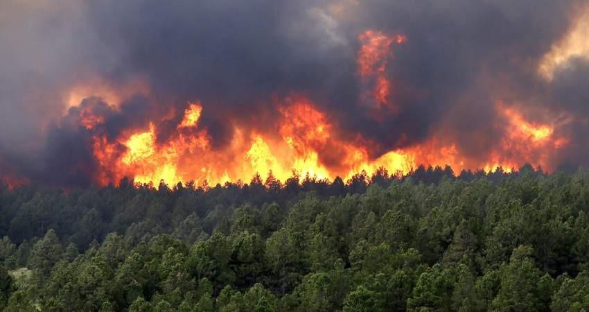هشدار درباره حریق جنگل ها با شروع فصل گرما