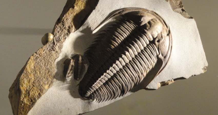 افتتاح تنها موزه دیرینه شناسی کشور در یزد