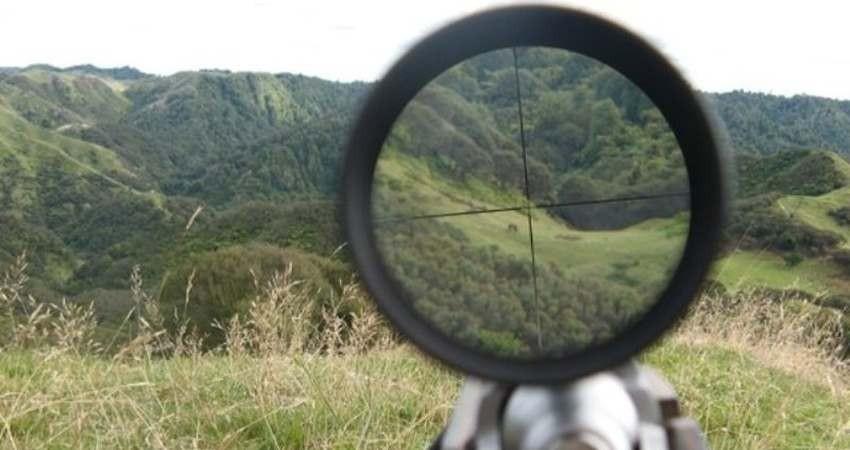 میزان جرایم شکار و صید افزایش یافت