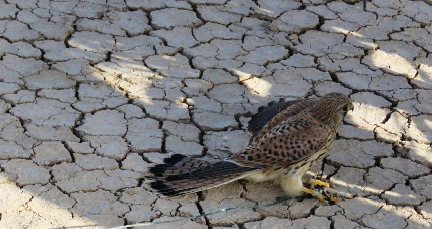 باندهای قاچاق و صید پرندگان شکاری در بوشهر متلاشی شد