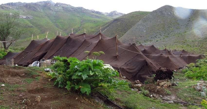 برپایی چادرهایی در مراتع البرز که غذای محلی می فروشند