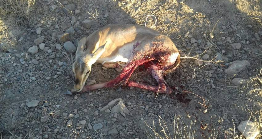 هجوم به حیات وحش به علت گرانی گوشت