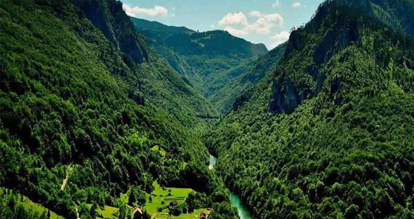 15 پهنه از جنگل های هیرکانی ثبت جهانی می شود