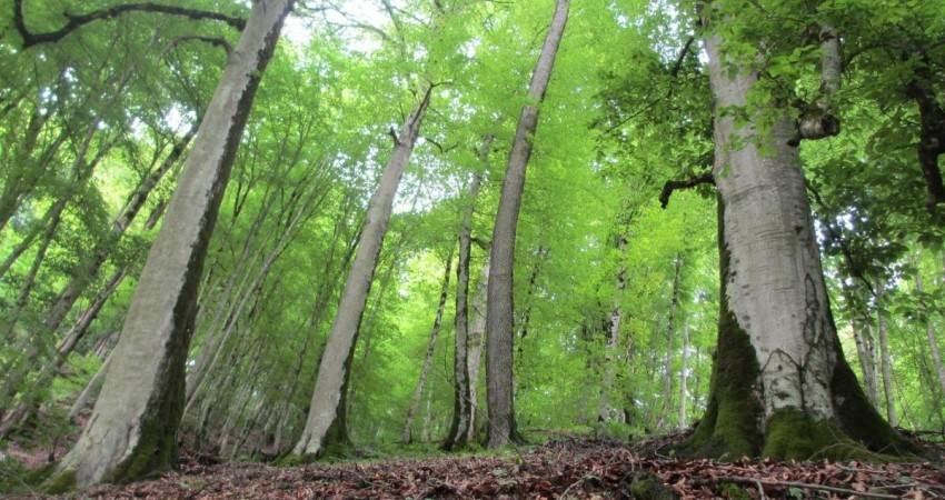 جنگل های هیرکانی ثبت جهانی شد