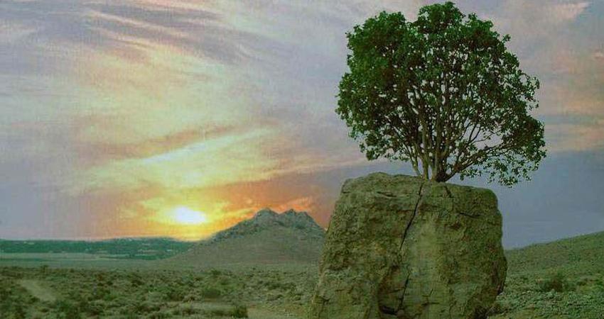 از مروارید سبز و سنگ صبورش چه می دانید؟