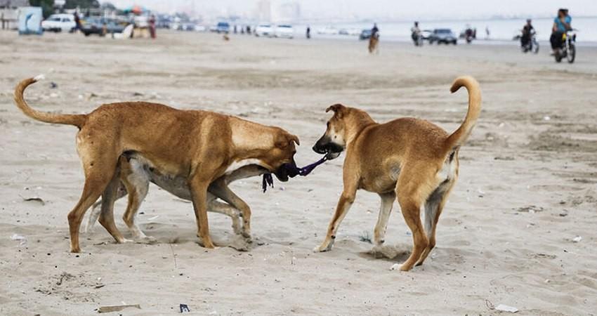 """آیا """"مرگ با ترحم"""" سگ های بدون صاحب، دستورالعمل وزارت کشور است؟"""
