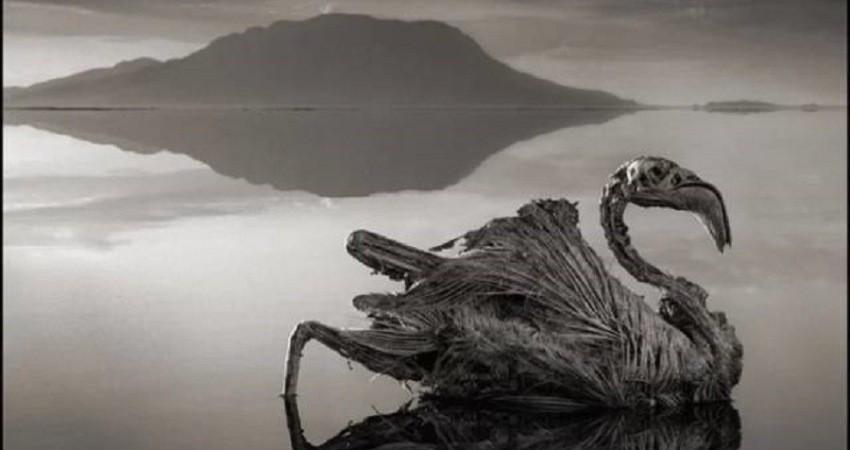 دریاچه ناترون، دریاچه ای که حیوانات در آن به سنگ تبدیل می شوند!