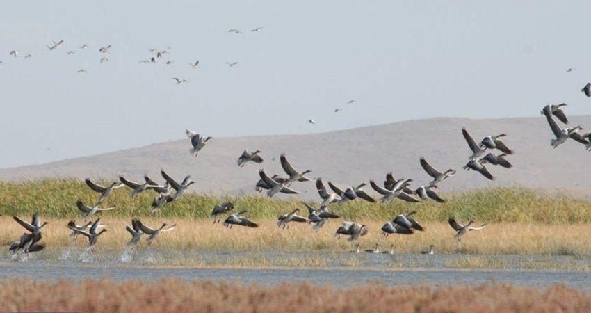 راه اندازی نخستین باشگاه پرنده نگری در یزد