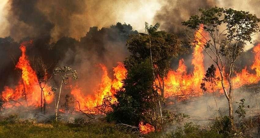حدود ۳۰ هزار هکتار از جنگلهای رودبار در آتش سوخت
