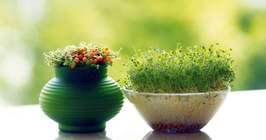 اسفندانه جشنی از جنس نوروز در یزد