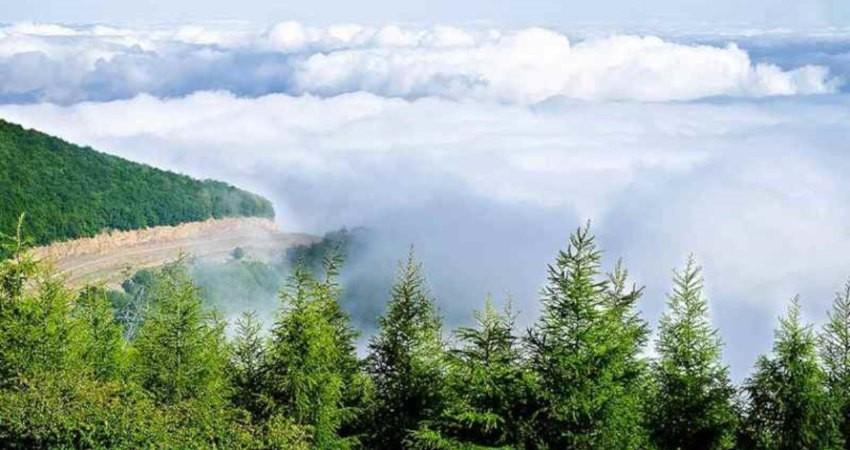 کروناویروس فرصتی برای پاکسازی جنگل ابر