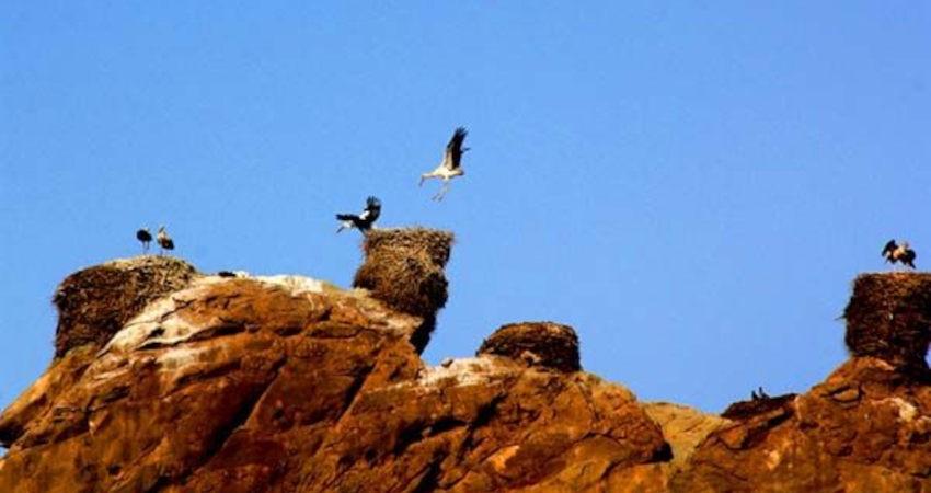 قلعه لک لک ها جاذبه منحصر به فرد شهرستان ماهنشان