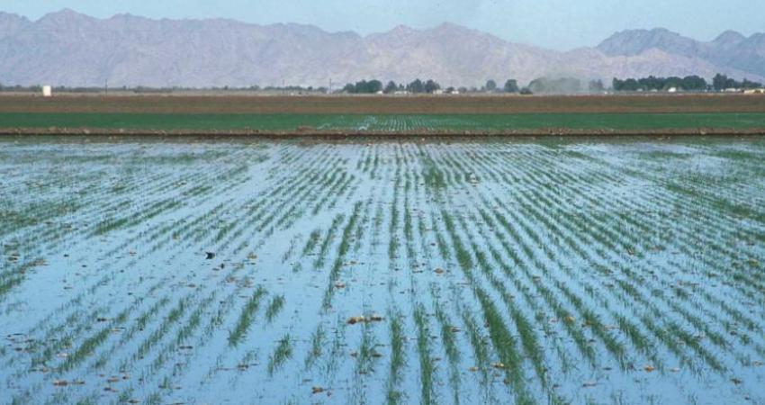 50 درصد آب در کشاورزی هدر می رود