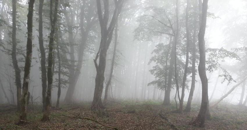 نقش منابع انسانی در حفاظت از منابع طبیعی