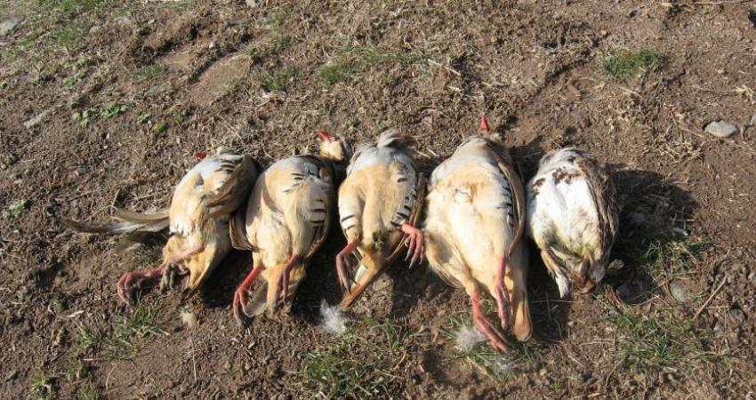 ادامه ممنوعیت شکار پرنده در 10 استان
