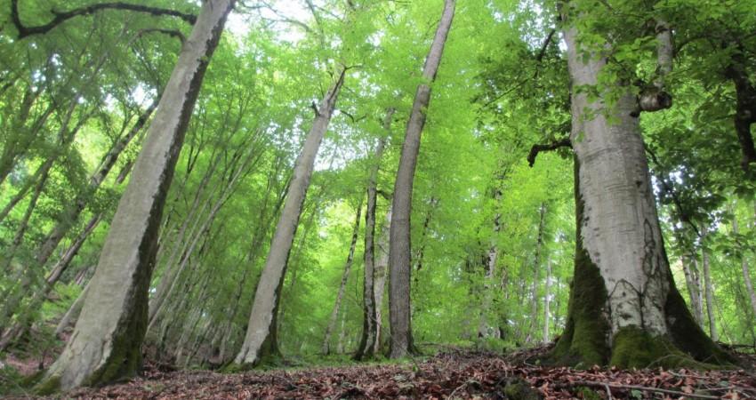 حمایت پروژه هیرکانی از پایان نامه ها و تحقیقات مرتبط با جنگل