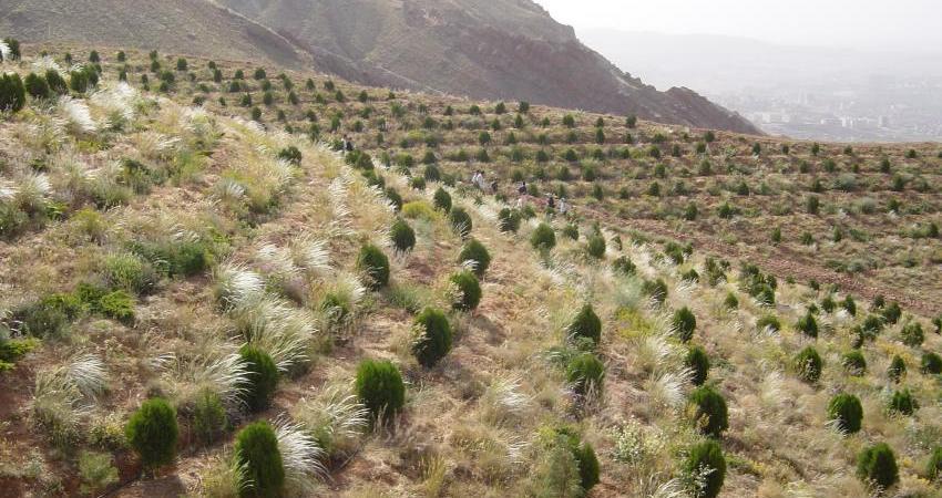تشدید گرمایش جهانی با جنگل کاری های انسانی