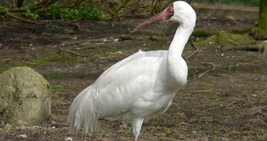 امید، ناامید ترین پرنده دنیا