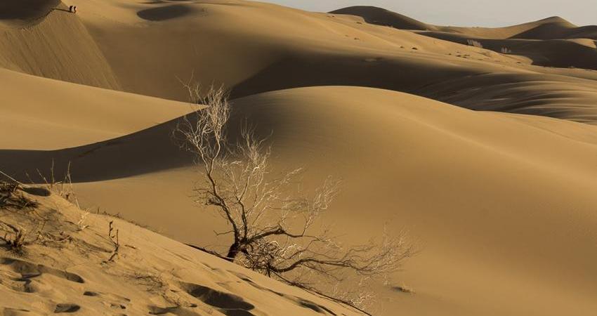 حکم خروج دامداران از پارک ملی کویر با مرگ توله گرگ