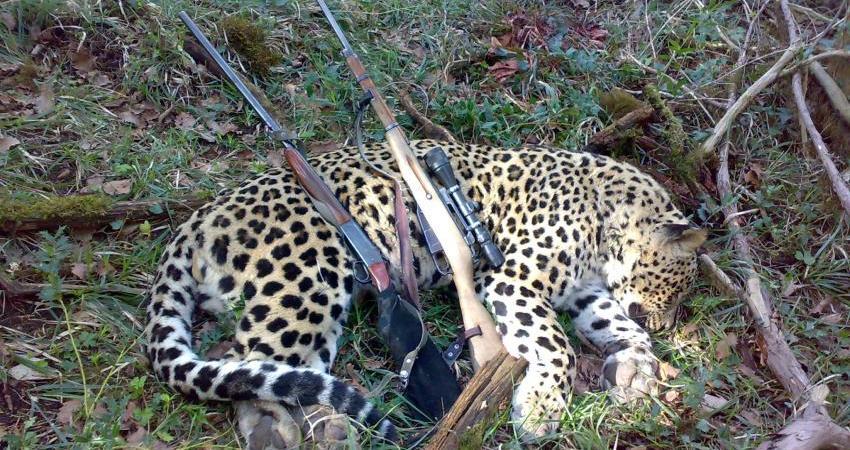 جریمه شکار پلنگ ایرانی 20 برابر شد