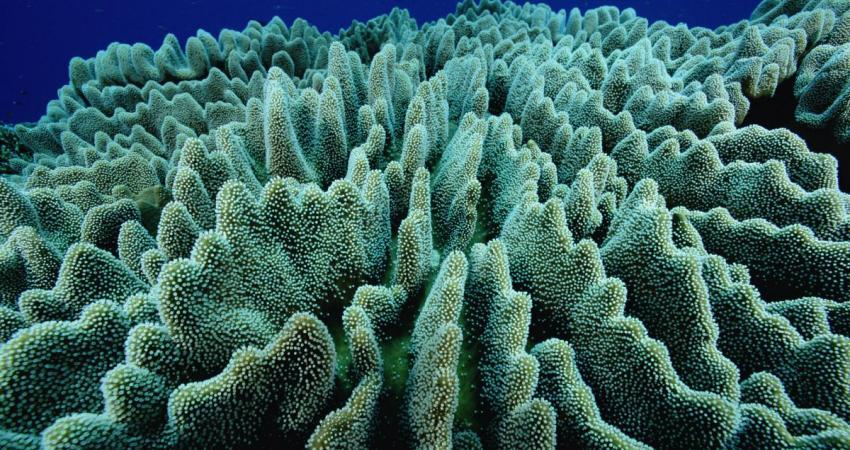 پایش مرجان های چابهار به دلیل آلودگی نفتی متوقف شد