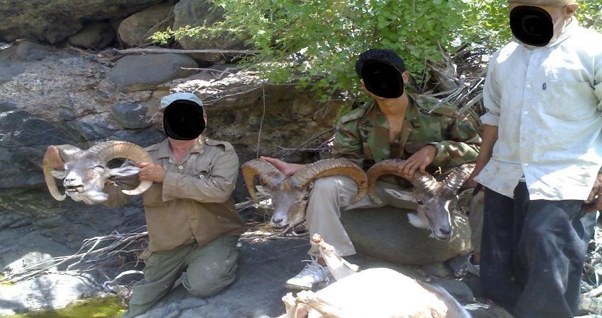 عکس یادگاری، شکار  11 راس قوچ وحشی را فاش کرد