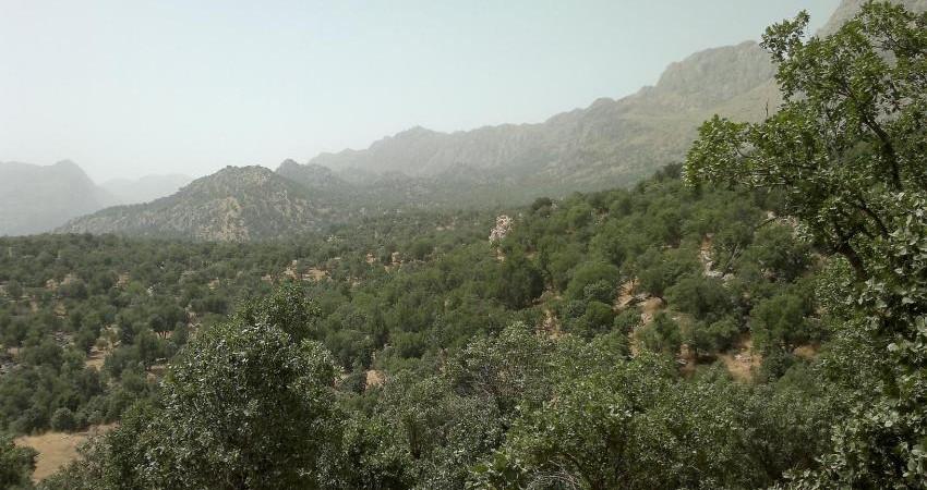 ابتکارات سبز مرتعداری در کوهستان زاگرس مرکزی