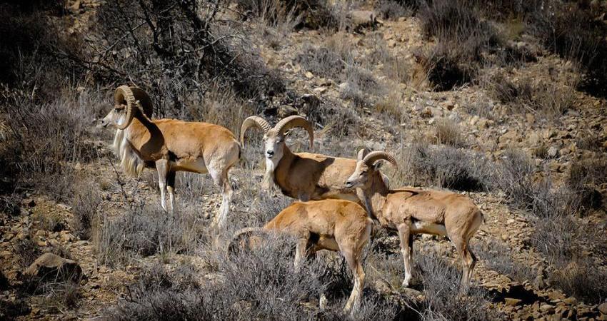 اکوسیستم و گونه های جانوری طبرستان در معرض انقراض است
