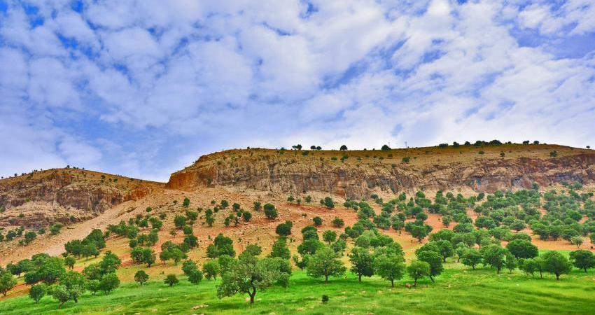 18 میلیون از درختان زاگرس را از دست دادیم