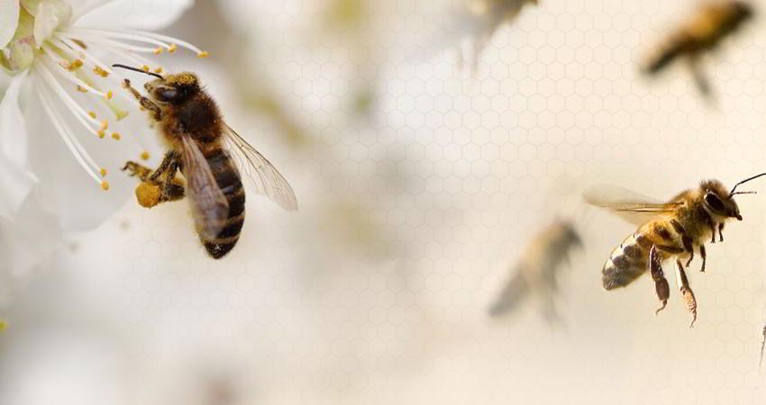 چرا این حشرات در مزرعه و باغ های ما نیستند؟