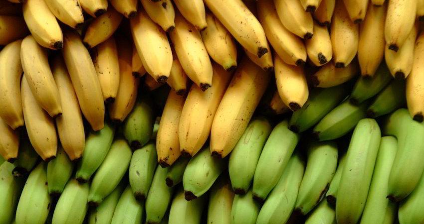 آیا مردم جهان باید با میوه موز خداحافظی کنند؟