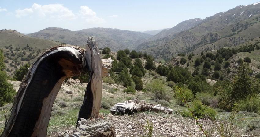 شواهدی بر ناکارآمدی سیستم های حفاظت از محیط زیست کشور