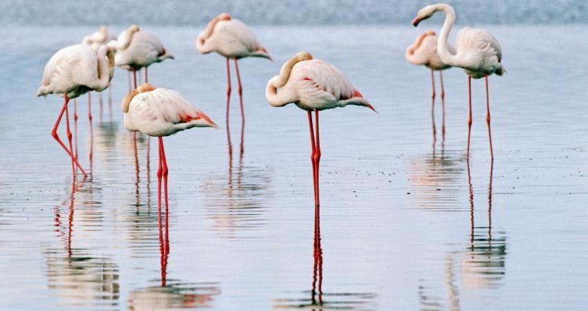 مرگ مشکوک پرندگان در دریاچه ارومیه