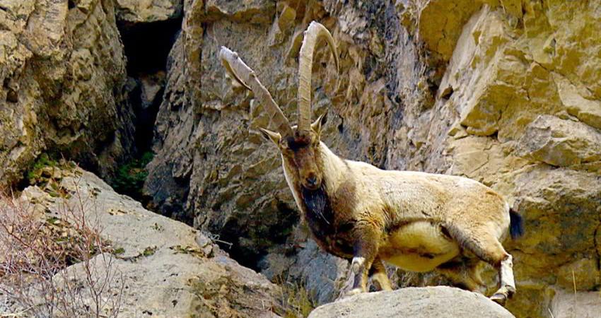 راهکاری جهانی برای حفظ و توسعه پایدار گردشگری در مناطق حفاظت شده