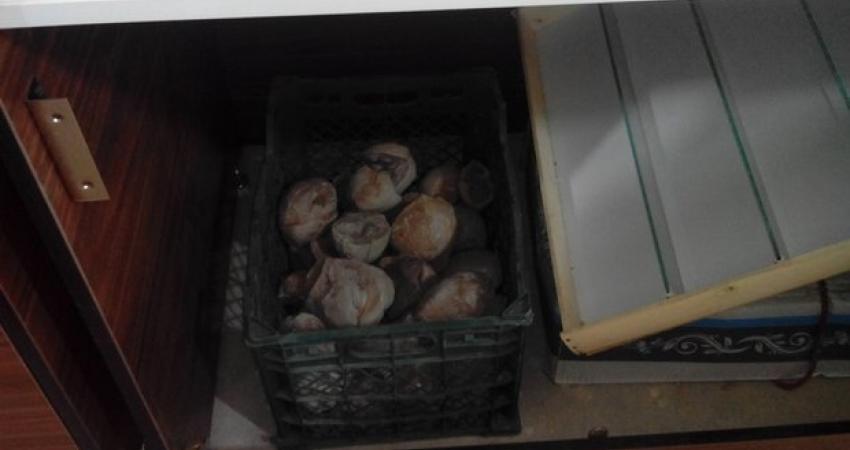 تخم جانوران ماقبل تاریخ در جعبه میوه
