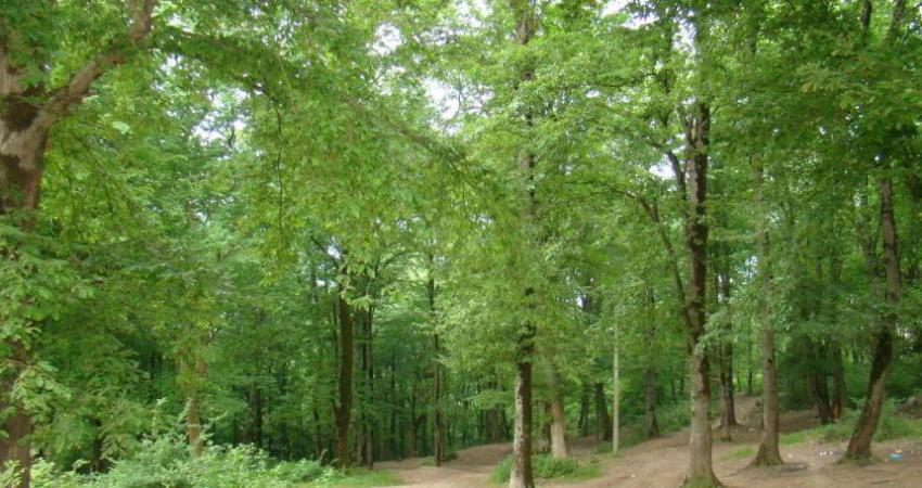 هر 15 هزار هکتار جنگل تنها یک نیروی حفاظتی دارد