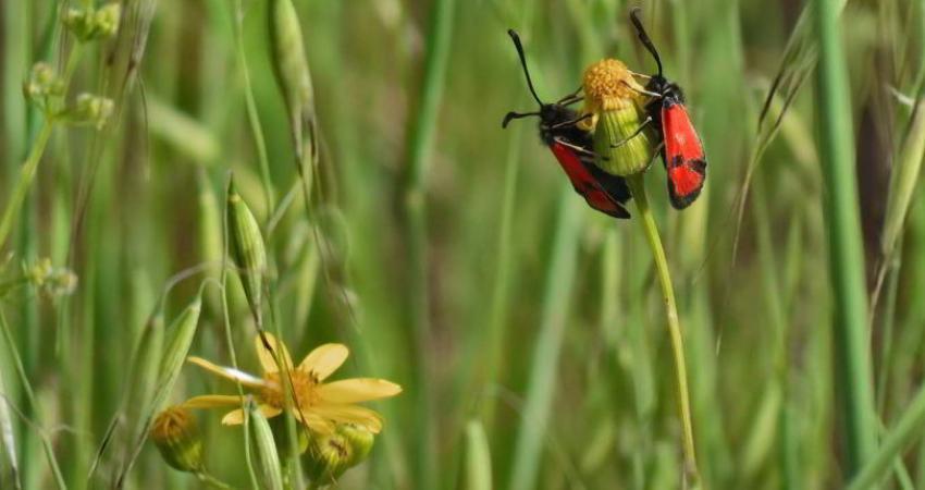 راه های مقابله با پشه در طبیعت گردی