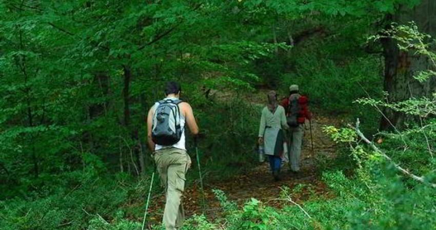 3 مفقود جنگل های الیمستان پیدا شدند