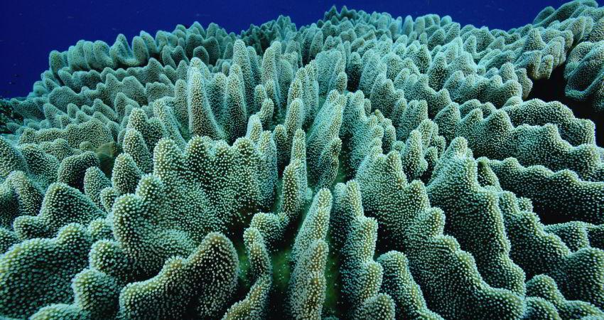 مرگ مرجان های خلیج چابهار به دست تخلیه مواد نفتی