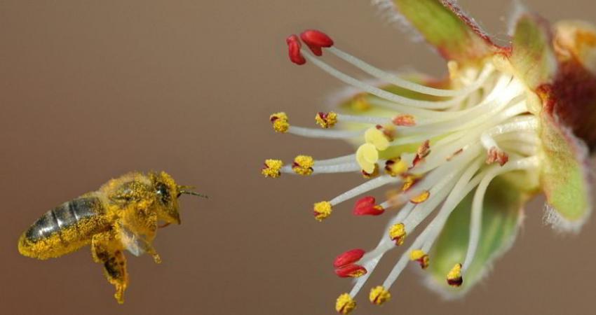 حمله زنبورهای وحشی به یکی از روستاهای بزمان جان یک نفر را گرفت